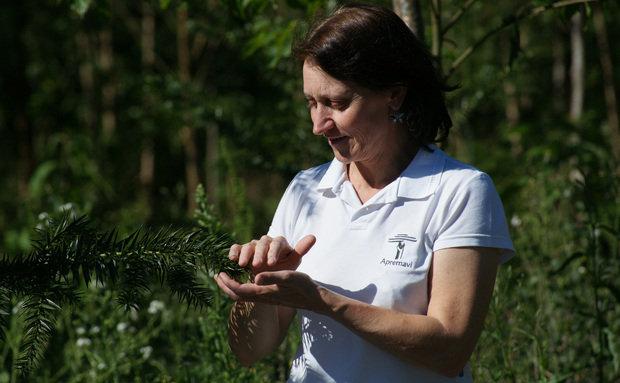 Campanha Plantadores de Florestas da Apremavi promove a recuperação de áreas degradadas.