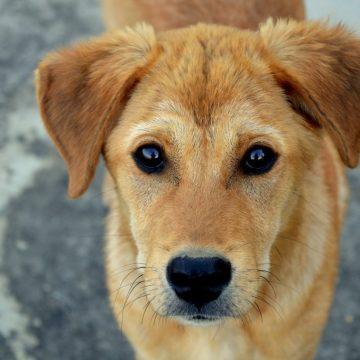 Cerca de 15 cães são encontrados mortos com suspeita de envenenamento