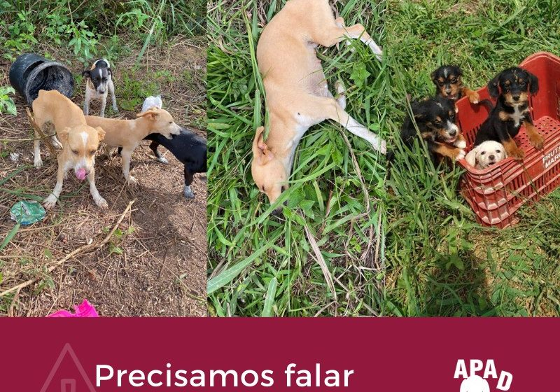 APAD incentiva denúncias em casos de abandono de animais