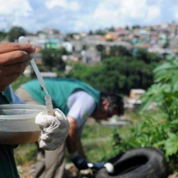 Três focos do mosquito transmissor da dengue já foram detectados no Alto Vale