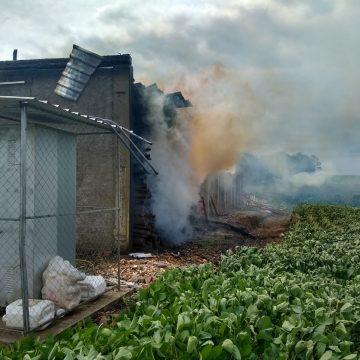 Agricultor estima prejuízo de mais de R$ 250 mil após incêndio em estufa