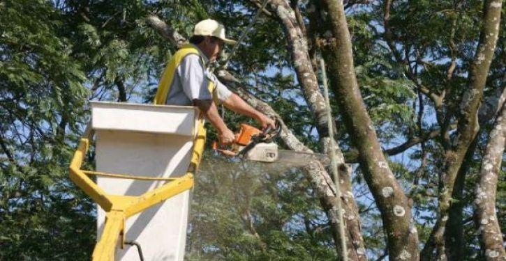 Celesc fará poda de árvores próximas à rede de energia em RSL