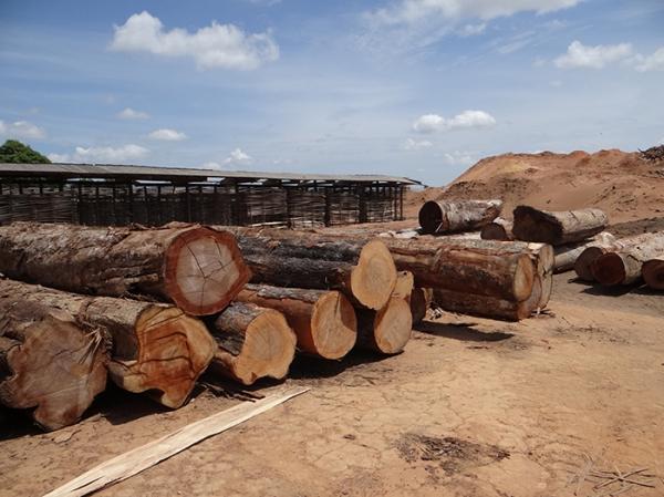 Setor madeireiro pede retorno das atividades em Santa Catarina
