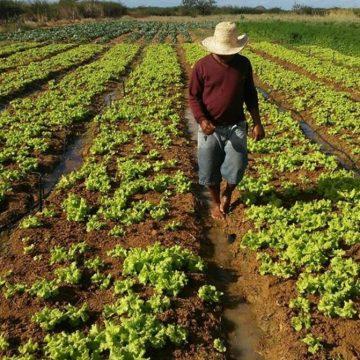 Agricultores da região são afetados também pela pandemia de coronavírus