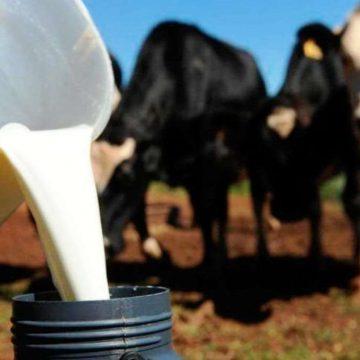 Estiagem pode gerar prejuízo na produção de leite aqui na região