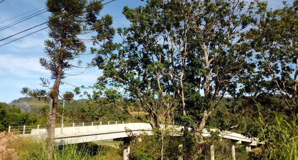 Prefeitura de Rio do Sul realiza corte de árvores às margens da Rodovia SC-350