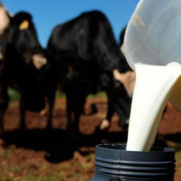 Baixa qualidade das pastagens afeta produção de leite e aumenta custos para agricultores