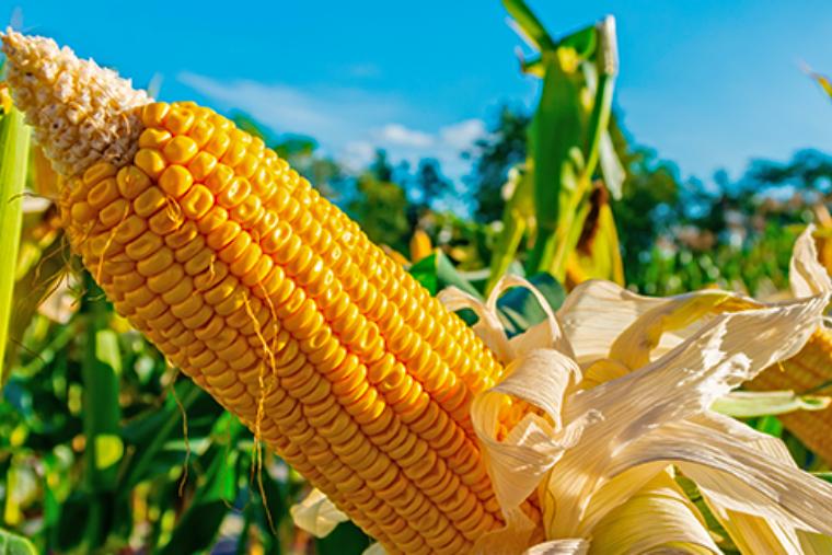 Governo de SC está incentivando produtores, com o objetivo de dobrar a produção de inverno em três anos