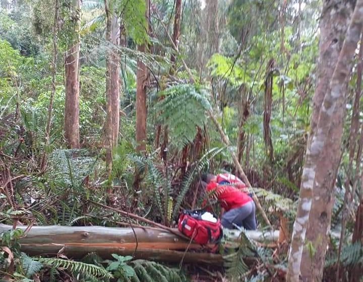 Homem morre ao ser atingido por árvore durante trabalho de reflorestamento, em presidente Getúlio