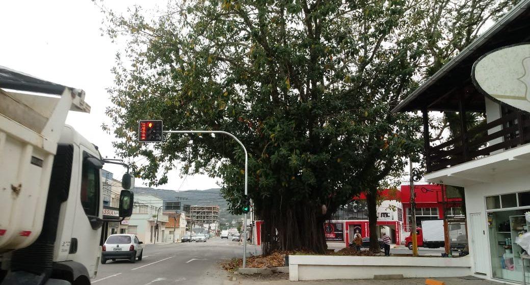 Comunidade solicita retirada de árvore que está em praça do Canoas