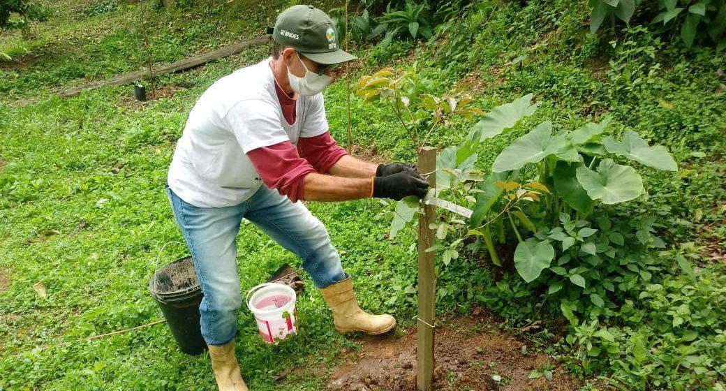 Associação Viva a Vida, de Rio do Sul, realiza plantio de árvores