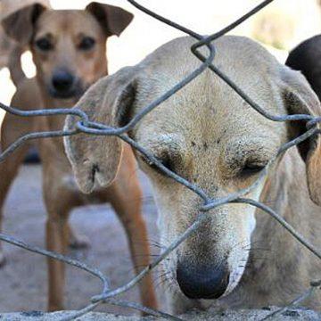 Agora é lei: quem maltratar cães e gatos pode pegar até 5 anos de prisão