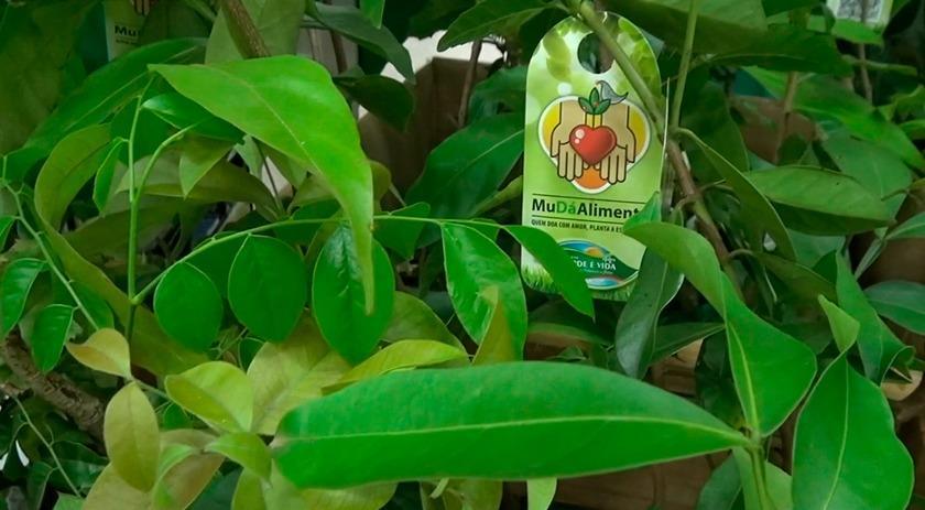 Afubra arrecada 850 kgs de produtos na campanha que troca mudas de árvores nativas por alimentos