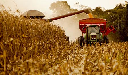 Safra de grãos apresenta bom preço, mas falta de chuva preocupa analistas