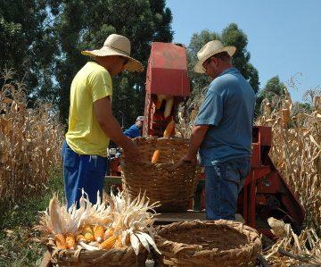 Bons preços pagos ao produtor rural são os destaques do mês de outubro em SC
