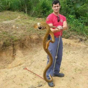 Bombeiros de Ibirama registram um aumento de 36% em captura de serpentes
