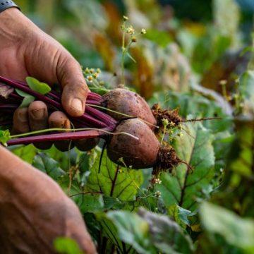Programa da Secretaria da Agricultura de SC ajudará produtores rurais em situação de vulnerabilidade social