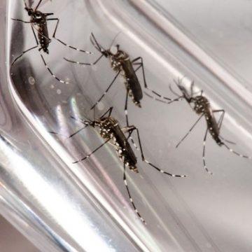 Neste ano, 26 focos do mosquito Aedes aegypti já foram identificados em Rio do Sul