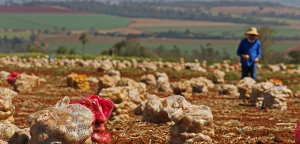 42 pessoas são resgatadas em condições análogas a escravidão em propriedades agrícolas da região