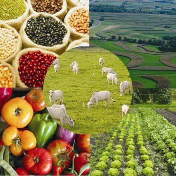 Agroindústrias e técnicos da região recebem capacitação para que empresas possam comercializar produtos com todo o país