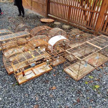 Operação apreende 15 aves mantidas ilegalmente e com sinais de maus-tratos em Taió