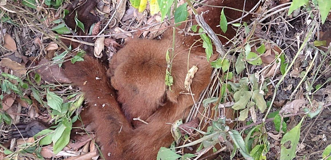 Com morte de macaco por febre amarela, vigilância epidemiológica de Braço do Trombudo orienta que moradores sejam imunizados