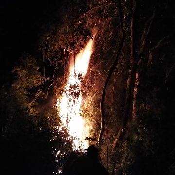 Incêndio em Aurora atinge reflorestamento de eucalipto e mata nativa
