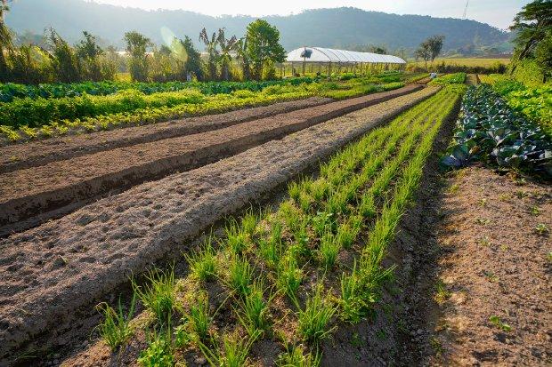 Com investimento de R$56,6 milhões, programa Terra-Boa fomentará aumento da produtividade das lavouras de SC