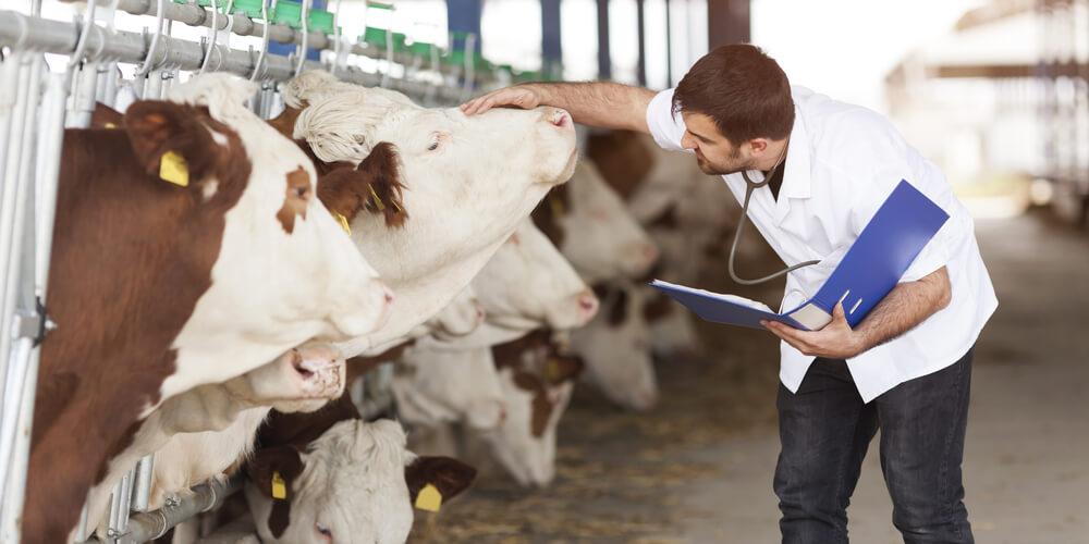 Médico veterinário esclarece importância da imunização aos profissionais de saúde da área