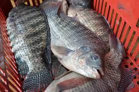 Municípios organizam feiras do peixe na semana santa
