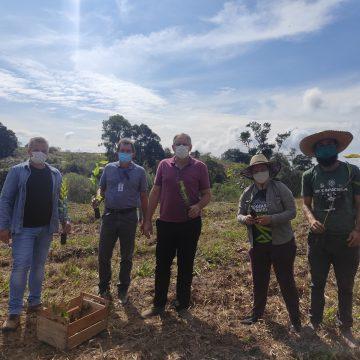 Mais de nove mil mudas de árvores são plantadas em Vidal Ramos pela Apremavi