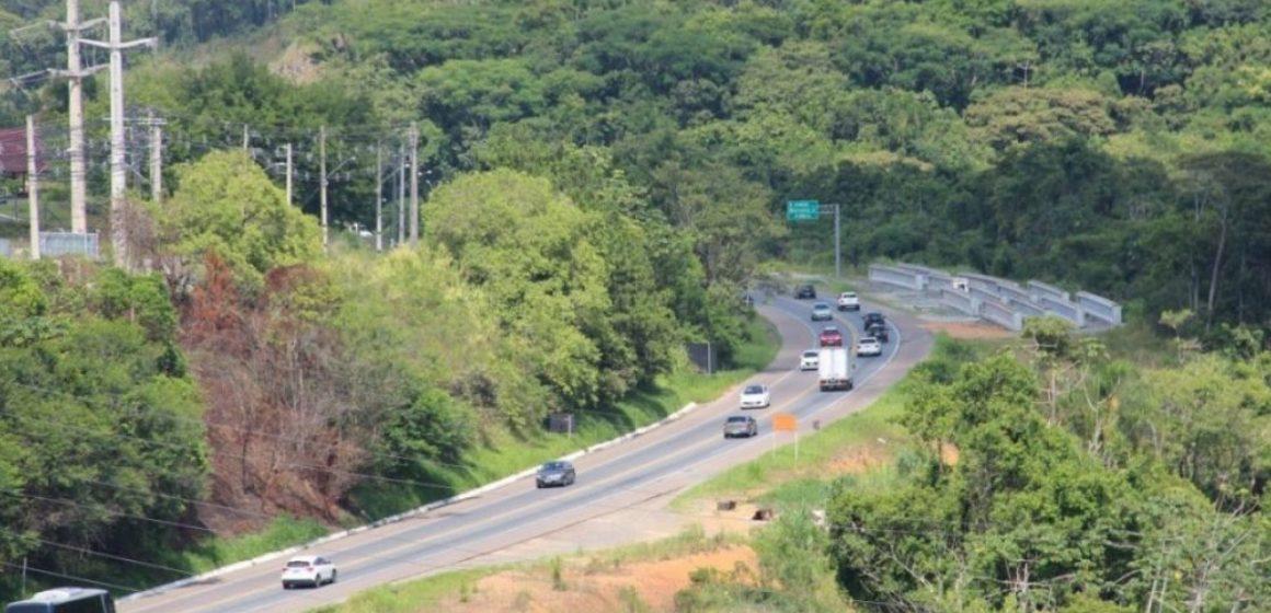 Corte de árvores na BR-470 custará quase R$ 500 mil
