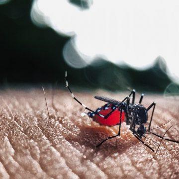 Contraprova descarta transmissão local de dengue, em Aurora