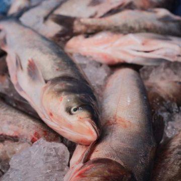 Municípios organizam feiras do peixe