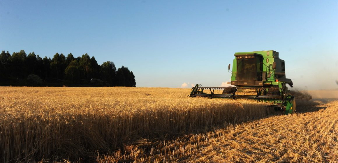 Agricultores catarinenses são incentivados a plantar cereais de inverno
