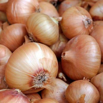 Falta de defensivo agrícola pode afetar próxima safra de cebola e alho