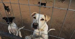 Ituporanga inicia projeto para controle populacional de cães e gatos