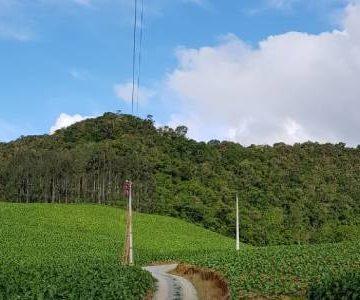 Programa Celesc Rural substitui mais de mil quilômetros de cabos de energia elétrica no Alto Vale