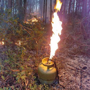 Incêndio criminoso consome 40.000 m² de área de reflorestamento e vegetação nativa, em Petrolândia