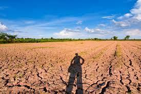 Estiagem garante recursos do estado em geração de energia e cooperativismo agrícola