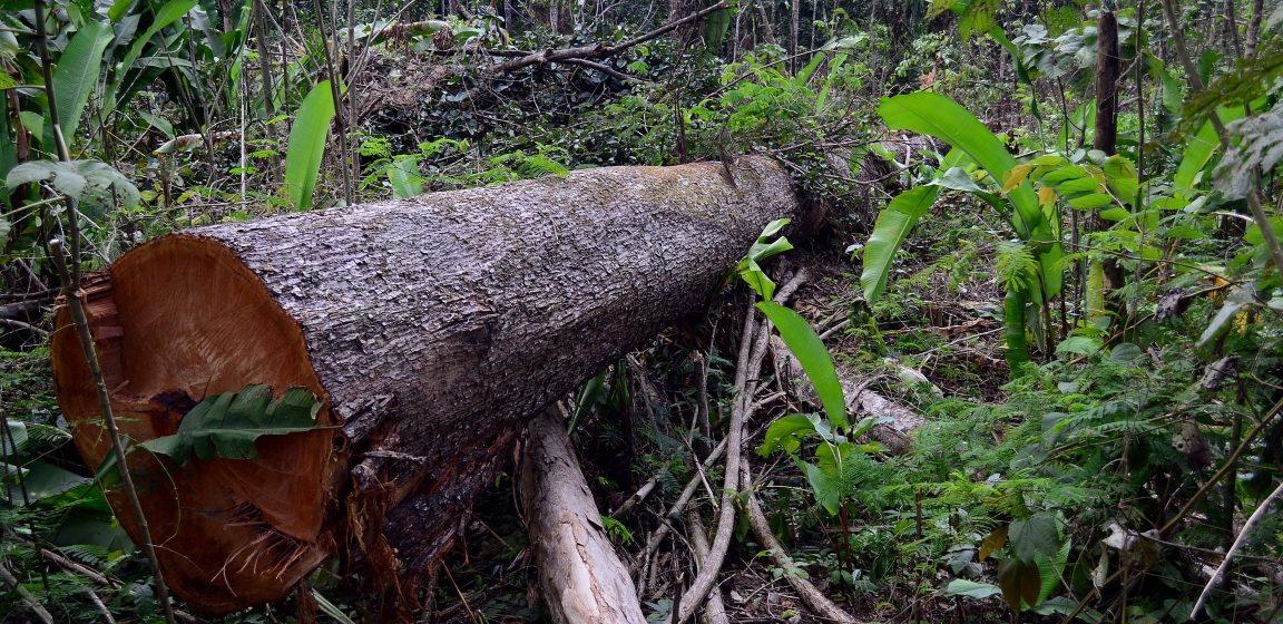 No dia de proteção às florestas, entidades da região defendem a criação de reservas ambientais