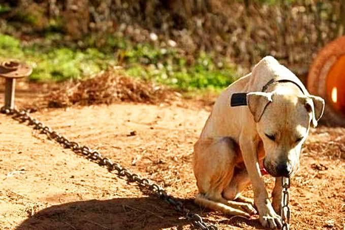 Divisão de proteção a animais domésticos de Rio do Sul vai fazer rondas para averiguar maus tratos contra cães e gatos