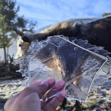 Temperaturas negativas reforçam a necessidade de proteger animais domésticos e pecuária catarinense
