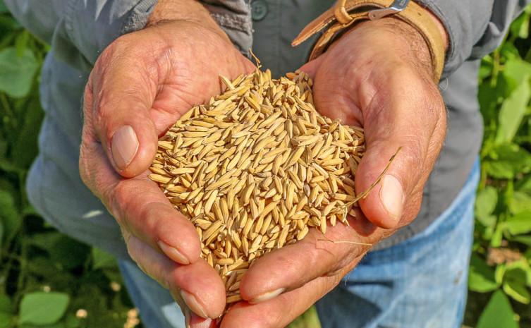Auditoria avalia possibilidade de comercialização dos produtos agrícolas da região para todo o país