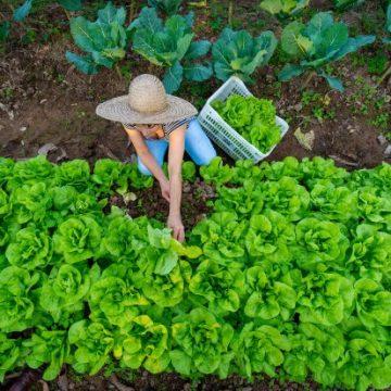 Governo quer incentivar agricultura orgânica em SC, estado é o quarto maior produtor nacional